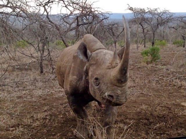 https://rexeroofing.com/rexeloads/uploads/2019/06/rhino-charge.jpg